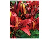 Sale! - 10 Red Asian Lily Blank Note Cards