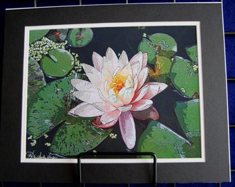 Peach Water Lily - Matted Print 11 x 14
