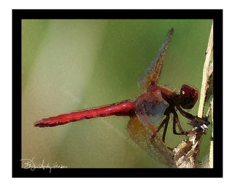 Sale - 10 Red Dragonfly Blank Note Cards