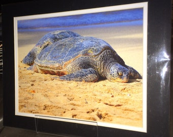 Turtle - Matted Print 11 x 14