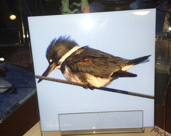 Decorative Tile - Kingfisher 8 in x 8 in
