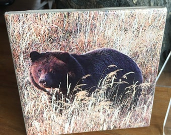 "Ceramic Tile - Grizzly Bear 'Big Girl'  4.25"" x 4.25"""