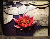 Large Glass Cutting Board - Red Lily - 12 in x 15 in