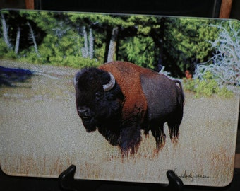 Glass Cutting Board - Bison 7.75in  x 10.75in