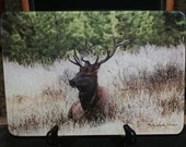 Glass Cutting Board - Elk Sitting 7.75in  x 10.75in