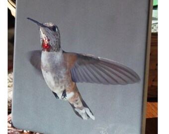"Ceramic Tile or Coaster  - Rufous Hummingbird  4.25"" x 4.25"""