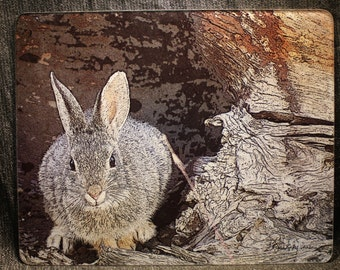 Large Glass Cutting Board - Mountain Cottontail - 12 in  x 15 in