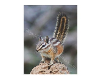 10 Chippy On Rock Blank Note Cards
