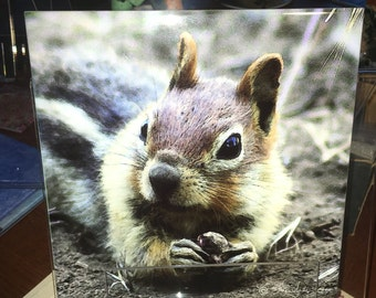 Decorative Tile - Ground Squirrel 8 in x 8 in