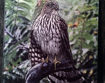 Glass Cutting Board - Cooper's Hawk 7.75in  x 10.75in