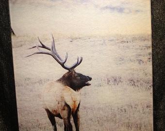 Large Glass Cutting Board - Elk Standing - 12 in x 15 in