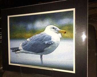 Gull - Matted Print 11 x 14