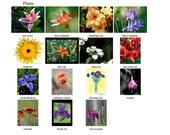 10 Garden Art Blank Note Cards - Custom Assortment