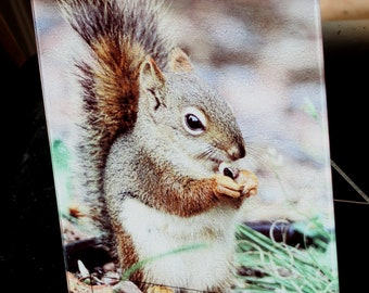 Red Squirrel MN- Glass Cutting Board - 7.75in x 10.75in