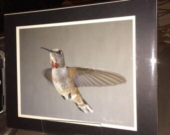 Rufous Hummingbird - Matted Print 11 x 14