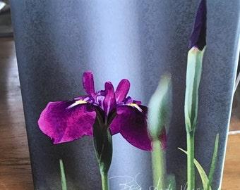"""Ceramic Tile - Iris Laevigata  4.25"""" x 4.25"""""""