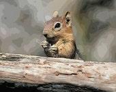 10 Golden Mantled Ground Squirrel Blank Note cards