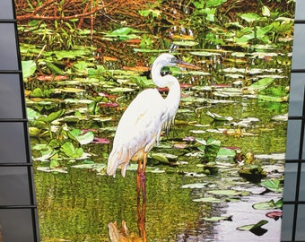 """Great White Heron (Facing Right) Canvas Print 26"""" x 16"""" x 1.5"""""""