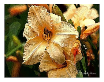 10 Peach Daylily  Blank Note Cards