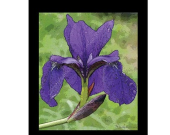 10 Purple Iris  Blank Note Cards