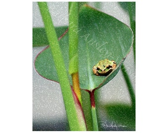10 Froggy on Leaf Blank Note Cards