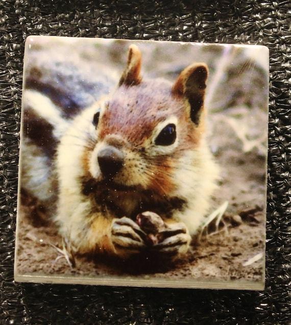 """Magnet Golden Mantled Ground Squirrel - 1.75"""" x 1.75"""""""