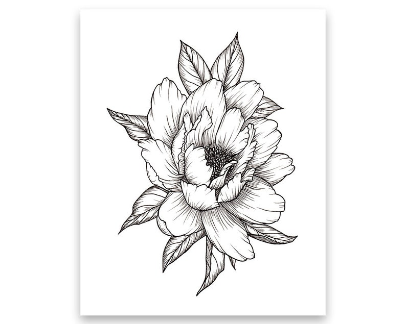 Peony Flower Art PRINT of Pen Illustration Flower Drawing  ff4412b90eb95