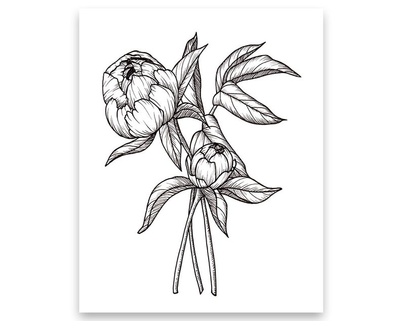 Peony Blossoms Bouquet Art PRINT of Pen Illustration Flower  16fa4ac88b3c4