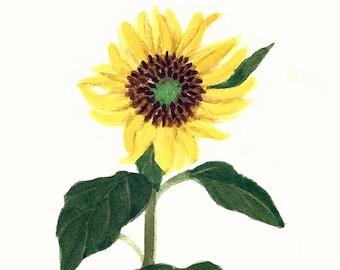 Yellow Sunflower Original Watercolor
