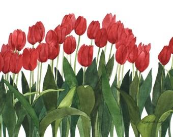 Red Row Tulips Reproduction of an Original Watercolor by Wanda Zuchowski-Schick