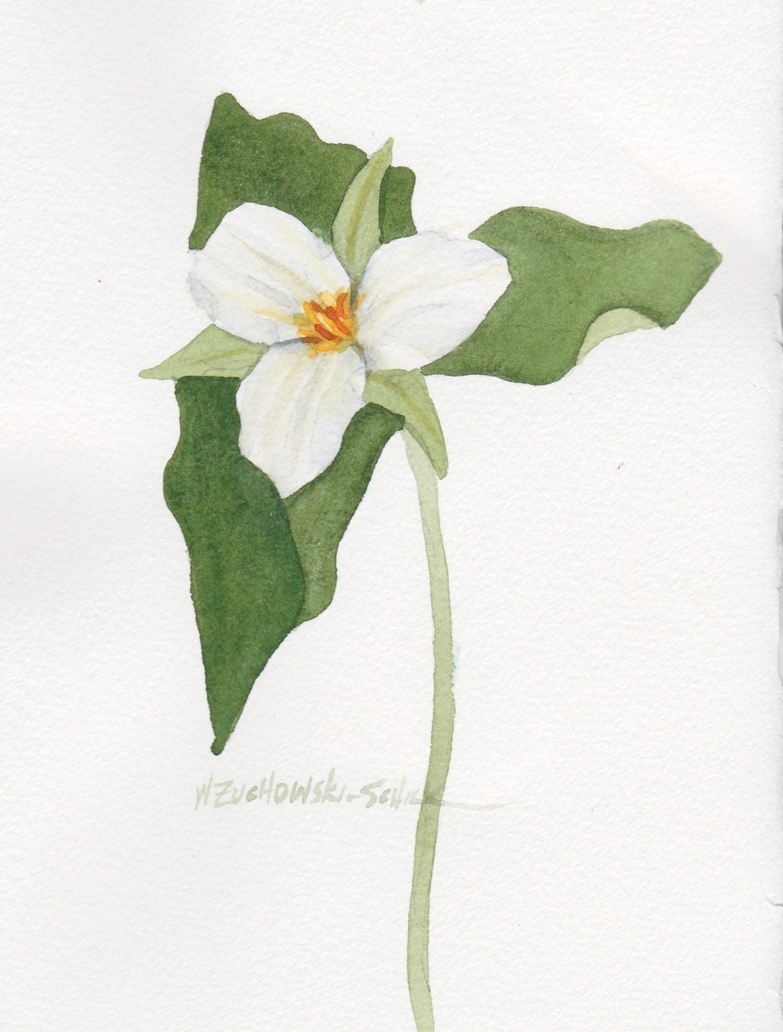 Single White Trillium 5 X 7 Original Watercolor Etsy