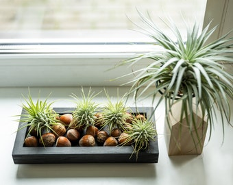 Air plant holder, wooden tray, air plant display, tillandsia planter, plant lover gift, home warming gift