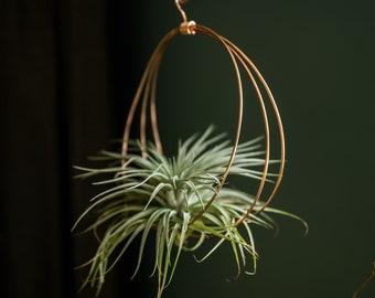 Copper air plant hanger,  air plant wall, hanging plant holder, display, plant lover gift, minimalist planter, tillandsia planter