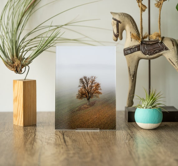 Acrylic photo print of lonely oak, tree wall art, tree print, solitude print, photo magnets fridge, home office decor, collectible gift