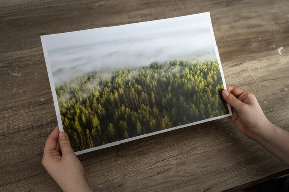 Forest print at spring, misty forest print, forest art print, forest fine art, mindfulness gift, Forest Wall Art, japandi wall art, fog art