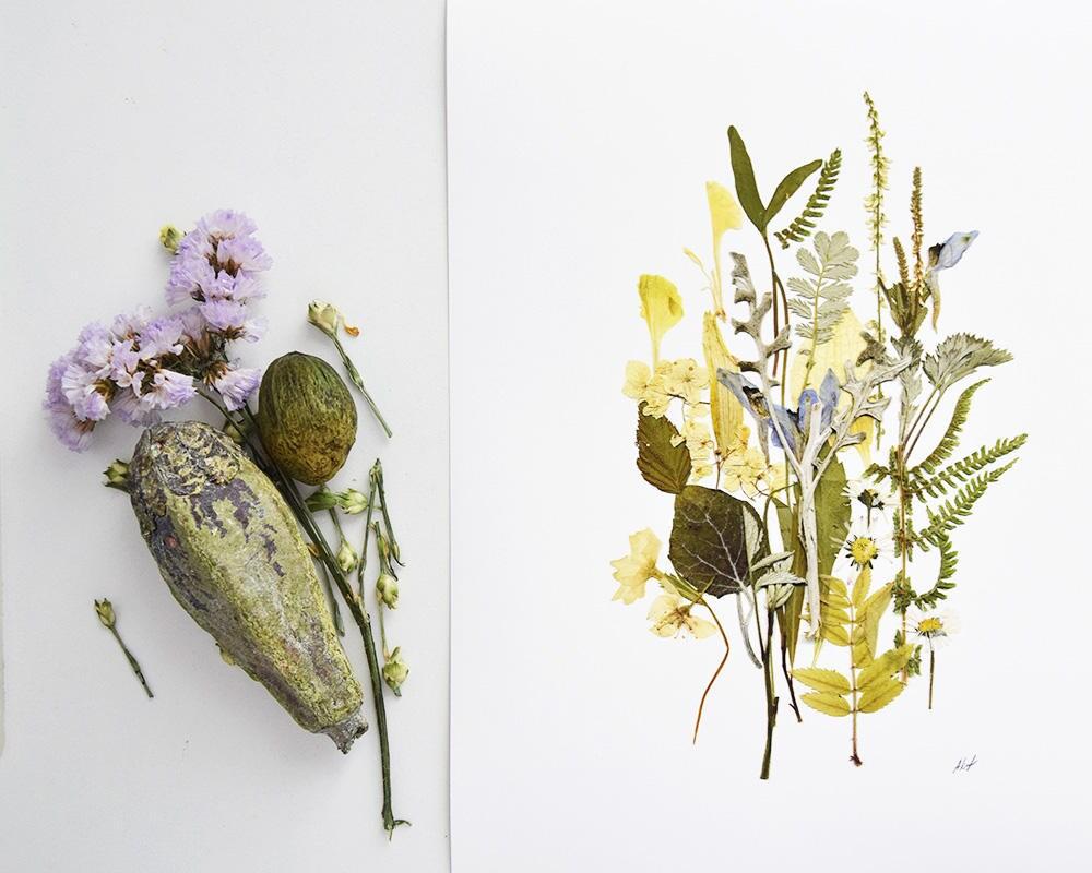 Botanische Drucke gepresste Blumen Druck Herbarium getrocknete | Etsy