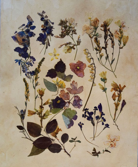 Herbarium Pressed flowers wall art Herbarium art Botanical art | Etsy