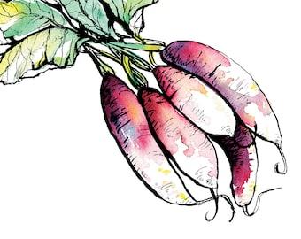 Radish Painting Wall Art, Food Illustration, Vegetables, Kitchen decor, Fine Art Print, Foodie Decor Gift, Watercolor vegetable, eat local
