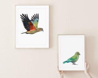 Kea print, New Zealand kea, New Zealand bird, New Zealand parrot, Kea art, New Zealand wildlife, New Zealand art, Kea poster, Kiwi print