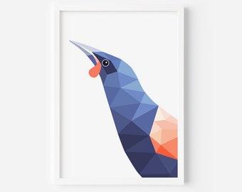 Tieke Print | Saddleback | Zealandia | NZ Painting | New Zealand Birds | Birds of New Zealand | nz Fauna | NZ Bird Watcher | Conservation NZ