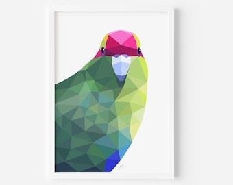 Kakariki Print | Parakeet Illustration | New Zealand Birds | New Zealand Art | Kiwiana | Kiwi Bird Art | New Zealand Nature | Wildlife Art