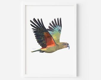 Kea Print | Kea Art | New Zealand Bird | Kea Bird | Kiwiana Art | New Zealand Gift | New Zealand Postcard | New Zealand Wildlife | Kiwi Bird