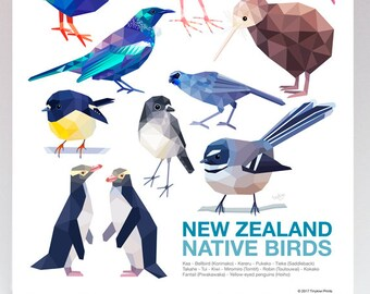 New Zealand bird print, Native NZ birds, New Zealand classroom poster, Tui art, Kiwi art, New Zealand art, Kiwiana art, Fantail, Kereru art