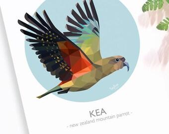 Kea print, New Zealand bird, Kea art, Mountain parrot, Geometric, Kiwiana, Kiwi artist, New Zealand poster, Kea poster, Kiwi classroom art