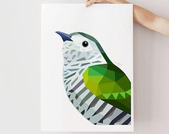 Shining Cuckoo print, New Zealand cuckoo art, Pipiwharauroa, Cuckoo illustration, Kiwi wall art, New Zealand bird art, Kiwi wildlife art