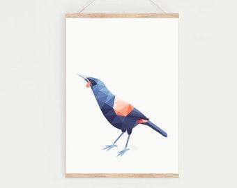 New Zealand art, Tieke bird, Kiwi poster, Saddleback art, Saddleback painting, New Zealand birds, Zealandia, New Zealand gift, Kiwi bird art