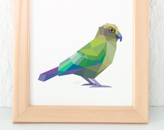 Kea parrot print, New Zealand mountain parrot, Geometric bird, Kiwiana, New Zealand wildlife, New Zealand art, Parrot print, Kiwi artist