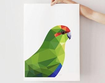 Kakariki print, Red-crowned parakeet art, New Zealand parakeet illustration, Kiwi art, Green poster, New Zealand bird poster, NZ parrot art