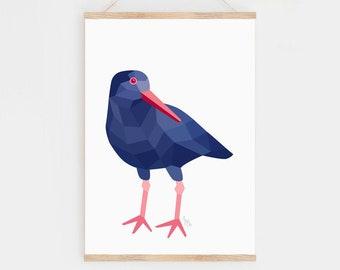New Zealand art, Oystercatcher, New Zealand birds, Kiwi art, Seabirds, New Zealand gift, Kiwi bird, New Zealand beach art, Ocean creatures
