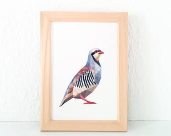 Chukar print, Chukar partridge illustration, Partridge print, Chukar decor, Animal art, Geometric partridge, American wildlife, Bird art